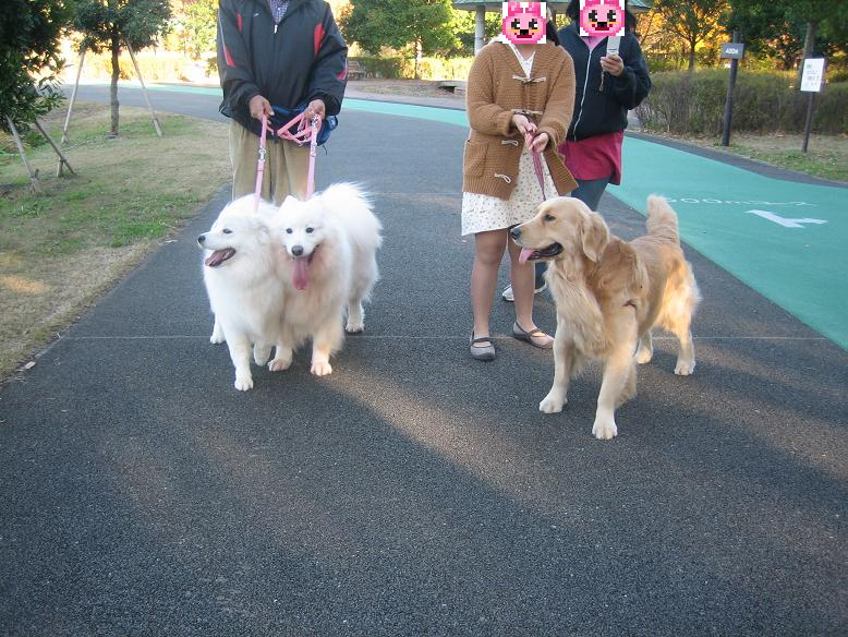 2011 年12月 ジョン君とお散歩 001