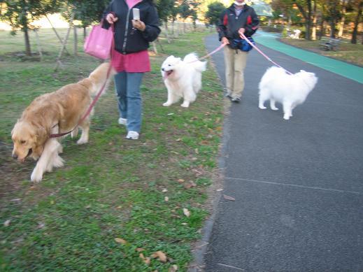 2011 年12月 ジョン君とお散歩 004