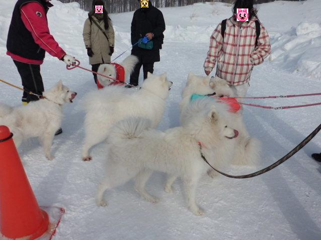 2012年 第7回犬ぞり大会 no2 032