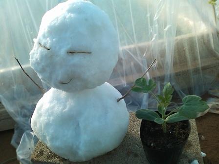 雪だるまwith苗