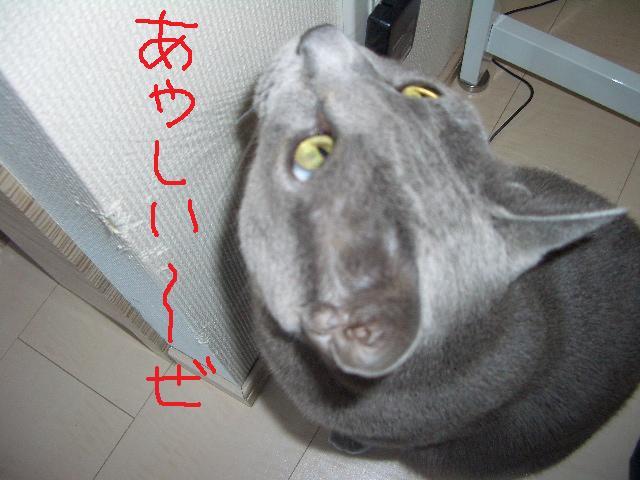 000_20100107213524.jpg