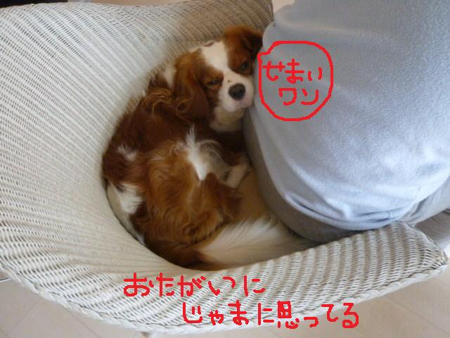 001_20101127124029.jpg