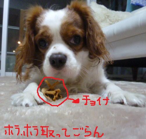 003_20101111191152.jpg