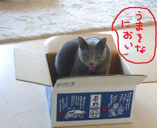 003_20101206082953.jpg