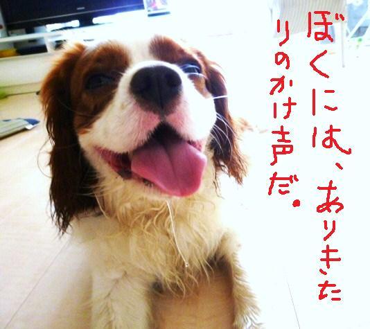 004_20100805165236.jpg