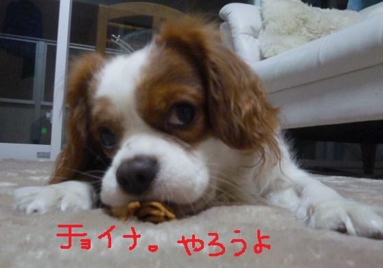 004_20101111190636.jpg