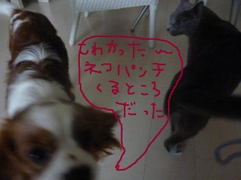 005_20100220165748.jpg