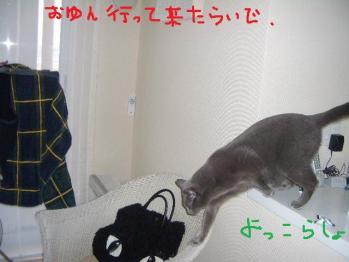 005_20100323175843.jpg
