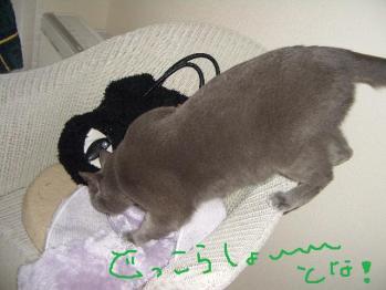 006_20100323180306.jpg