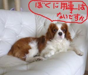 006_20101002092946.jpg