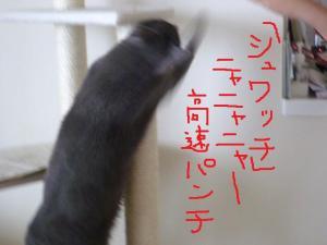 008_20100519103241.jpg