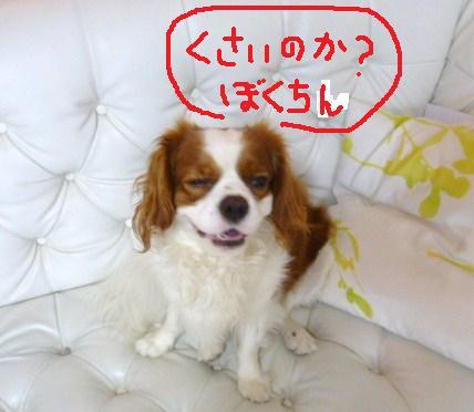 008_20101012084457.jpg