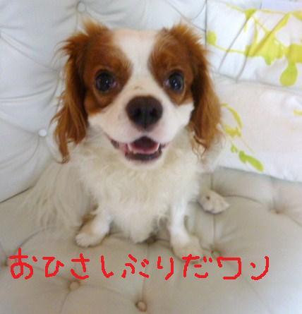 009_20101011092559.jpg