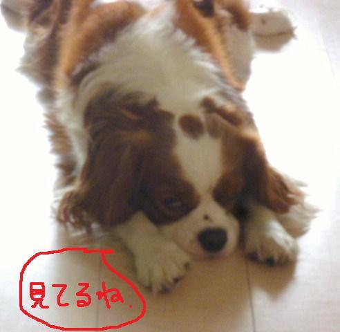 009_20101104103547.jpg