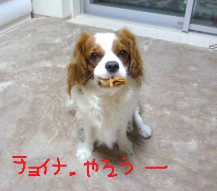 009_20101111191443.jpg