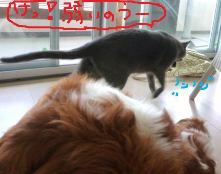 010_20100913220146.jpg