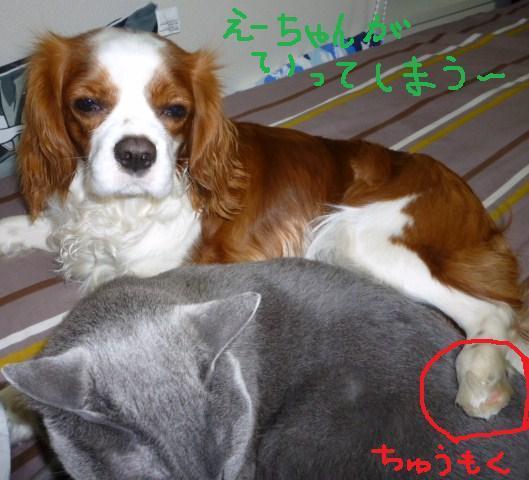 011_20100327091247.jpg