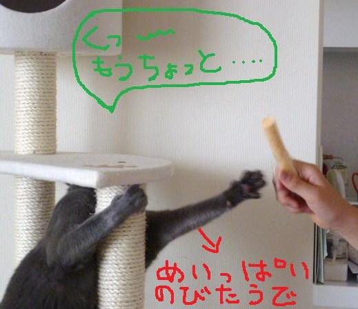 011_20100519103702.jpg