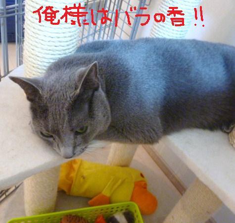 011_20101012085310.jpg