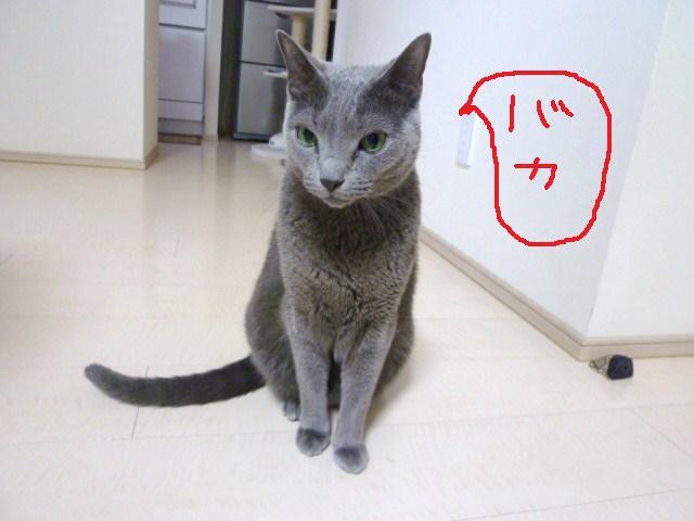 011_20110203174912.jpg