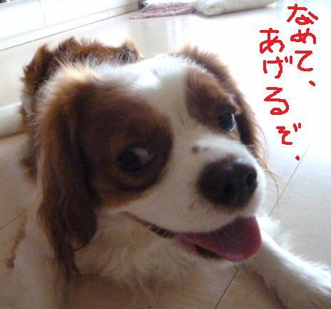 013_20100923110041.jpg