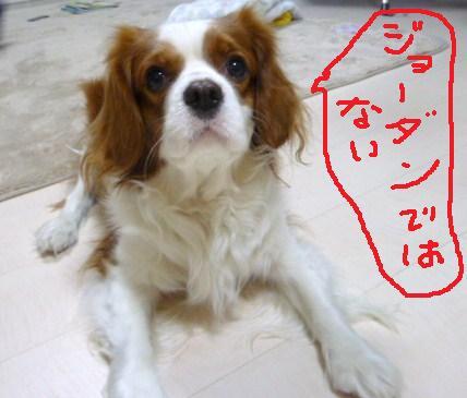 013_20110213161431.jpg