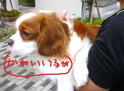 014_20101012221821.jpg