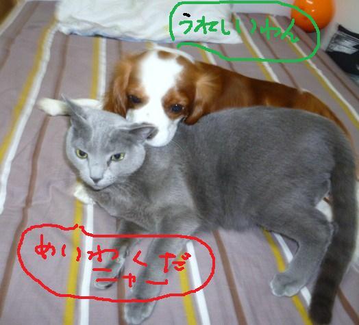 016_20100327091543.jpg