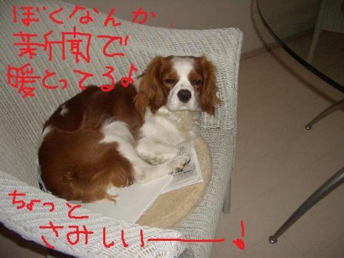 017_20100120203055.jpg