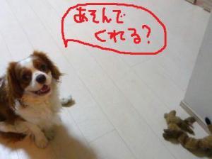 022_20101103202615.jpg