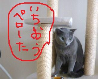 023_20101019212027.jpg