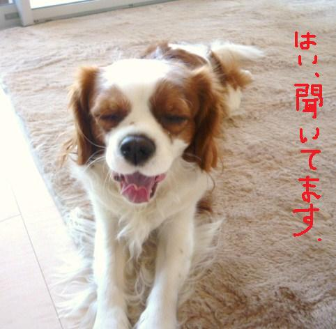 023_20110106102310.jpg