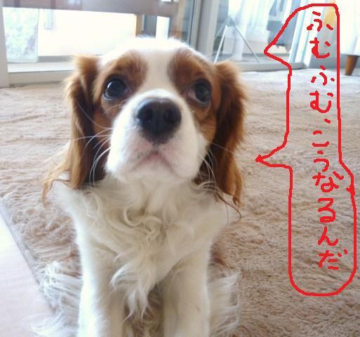 024_20110104200908.jpg