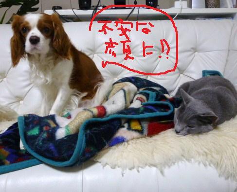 026_20100604100155.jpg
