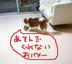 026_20101103203551.jpg