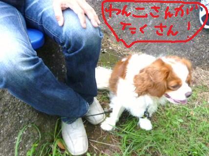028_20100926211434.jpg