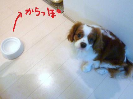 030_20101101205719.jpg