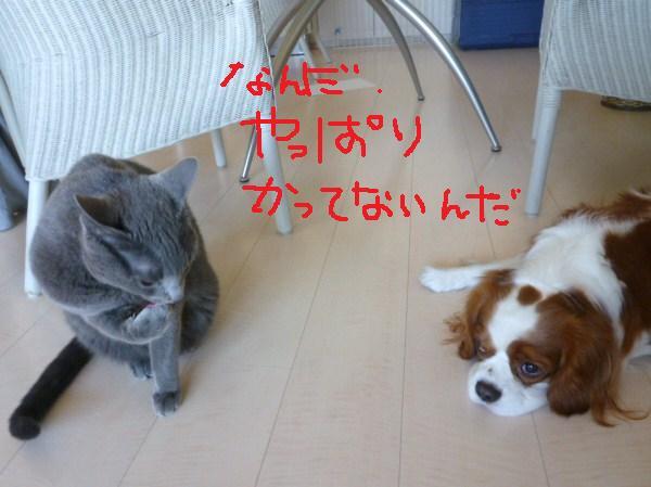 046_20110106103749.jpg