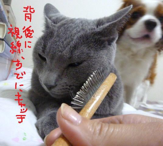 051_20100915185951.jpg