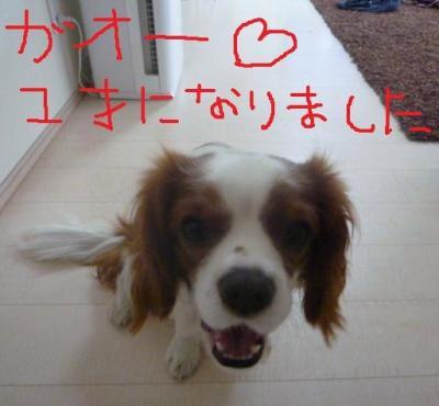 054_20100212083435.jpg