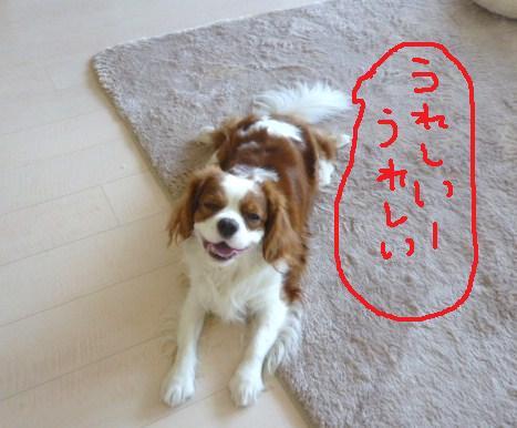 092_20101130195210.jpg