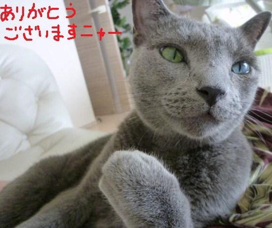 095_20100726082835.jpg