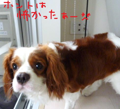 107_20100729182111.jpg
