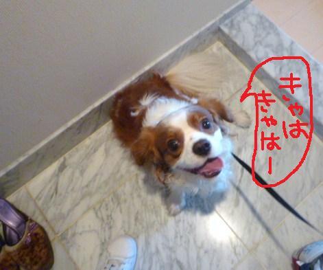 122_20101130200841.jpg