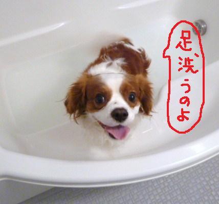 123_20101130201110.jpg