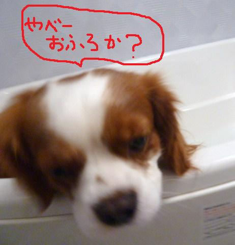 125_20101130201430.jpg