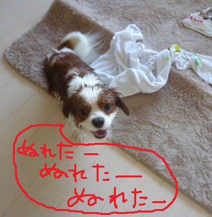 132_20101130202131.jpg