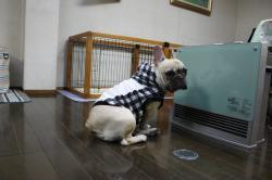 ストーブ犬