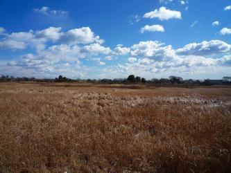 ビン沼川湿地帯