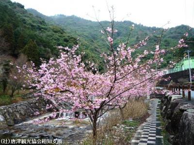 00.河津桜(2010年2月27日)